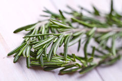 Fresh organic rosemary Stock Image