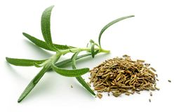 Fresh organic rosemary Royalty Free Stock Photography