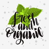 Fresh And Organic Rough Traced  Custom Artistic Handwritten Brus. H Calligraphy Design With Mint Leaves Illustration On A White Background. Vector Graphic Royalty Free Stock Photos