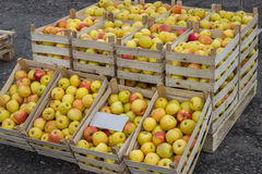 Fresh organic rows of apples crates at the farmers market Stock Images
