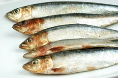 Fresh organic sardine and a bright background. Some fresh organic sardine and a bright background Stock Images