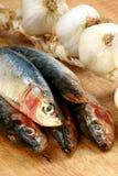 Fresh organic sardine on a timber board. Some fresh organic sardine on a timber board Stock Photo