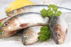 Fresh organic sardine on a white plate Stock Photos
