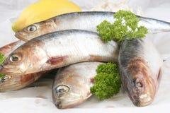 fresh organic sardine on a white plate Stock Photos