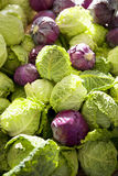 Fresh organic savoy cabbage and purple cabbage Royalty Free Stock Images