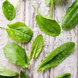 Fresh organic sorrel leaves. Background with fresh organic sorrel leaves on old white wood. Healthy food concept Stock Image