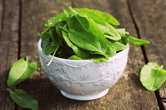 Fresh organic sorrel leaves in bowl on wooden table.  Stock Photography