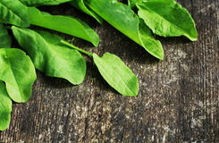 Fresh organic sorrel leaves ion wooden table. Fresh organic sorrel leaves on wooden table Royalty Free Stock Photo