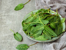 Fresh organic sorrel leaves in metal plate on grey concrete background. Healthy food concept. Fresh organic sorrel leaves in metal plate on grey concrete Stock Photo
