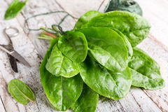 Fresh organic sorrel leaves. On old white wooden background. Healthy food concept Stock Photography