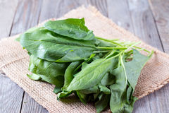 Fresh organic sorrel leaves on a wooden background. Fresh organic sorrel leaves on a wooden table royalty free stock photos