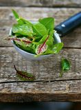 Fresh and organic sorrel leaves Stock Images
