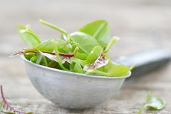 Fresh and organic sorrel leaves Royalty Free Stock Images
