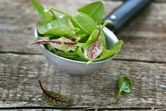 Fresh and organic sorrel leaves Stock Photo