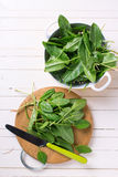 Fresh organic sorrel. On wooden board on white painted wooden planks. Selective focus Stock Image