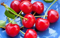 Fresh organic sour cherry Stock Images