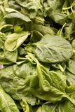 Fresh organic spinach Stock Image