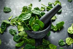 Fresh organic spinach leaves in marble pestle ready for pesto making.  Royalty Free Stock Image