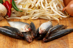 Fresh organic sprats and bean sprouts. Some fresh organic sprats and bean sprouts royalty free stock photos