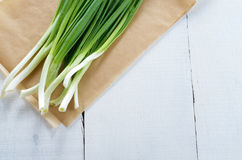 Fresh organic spring onion Stock Images