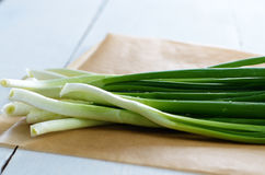 Fresh organic spring onion Stock Photography