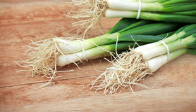 Fresh organic spring onions Stock Photography