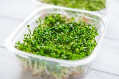 Fresh organic sprout micro greens in plastic box on the white wooden table. Healthy Raw diet food concept. Copy space for text. Se. Lective focus Stock Image