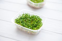 Fresh organic sprout micro greens in plastic box on the white wooden table. Healthy Raw diet food concept. Copy space for text. Se. Lective focus Royalty Free Stock Photography