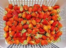 Fresh organic strawberries Royalty Free Stock Images