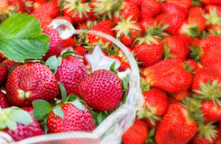 Fresh organic strawberries Royalty Free Stock Photography