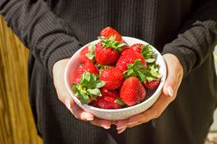 Fresh organic strawberries in bowl in hands. Organic strawberries in bowl in hands - fresh and healthy food Royalty Free Stock Images