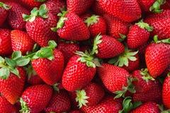 Fresh organic strawberries Stock Photography