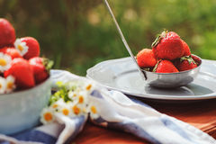 Fresh organic strawberries in plate in summer garden Royalty Free Stock Images