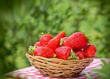 Fresh organic strawberries Stock Images