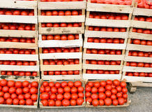 Fresh organic tomato in crates Royalty Free Stock Photos