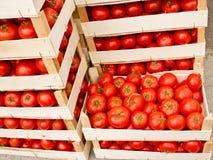 Fresh organic tomato in crates Royalty Free Stock Image