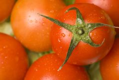 Fresh Organic Tomatoes Royalty Free Stock Photos