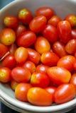 Fresh organic tomatoes in bowl Royalty Free Stock Image