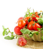 Fresh organic tomatoes and cucumbers in a basket Stock Images