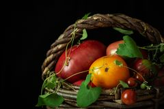 Fresh organic tomatoes in old wicker basket. Large wicker basket with a variety of ripe organic tomatoes on a dark background. Close-up royalty free stock image