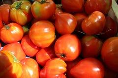 Fresh organic tomatoes Royalty Free Stock Image