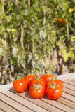 Fresh organic tomatoes on a teak table. With plants in the background Stock Image