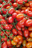 Fresh tomatoes stock photos