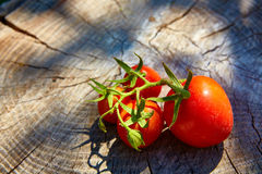 Fresh organic tomatoes Stock Photos