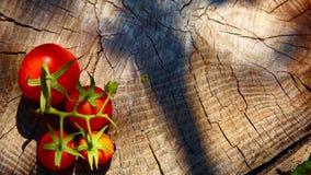 Fresh organic tomatoes Stock Image