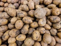Fresh organic tubers of potato on the farmers market. Close-up potatoes background stock photography
