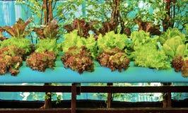 Fresh organic Stock Photo