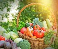 Fresh organic vegetable Stock Photography