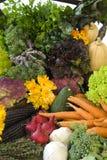 Fresh organic vegetables stock photography