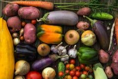 Fresh Organic Vegetables. Autumn Harvest Concept. Potatoes, toma Stock Photos
